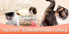 """""""MUFFIN"""" Exotic&Persian Cattery"""